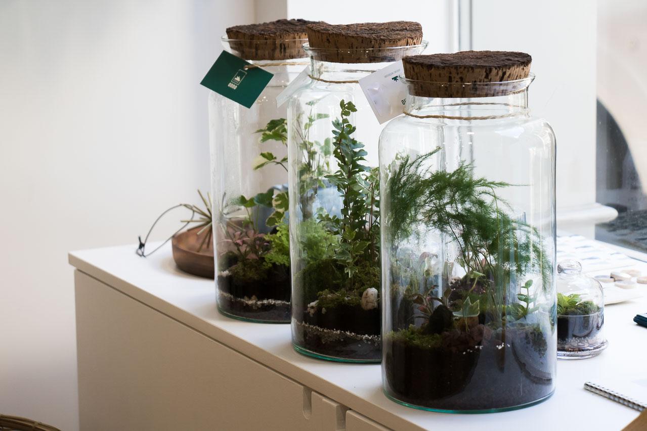 Les terrariums ONNO Maison Mathûvû