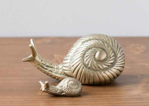 Escargot doré - Nkuku- Maison Mathûvû