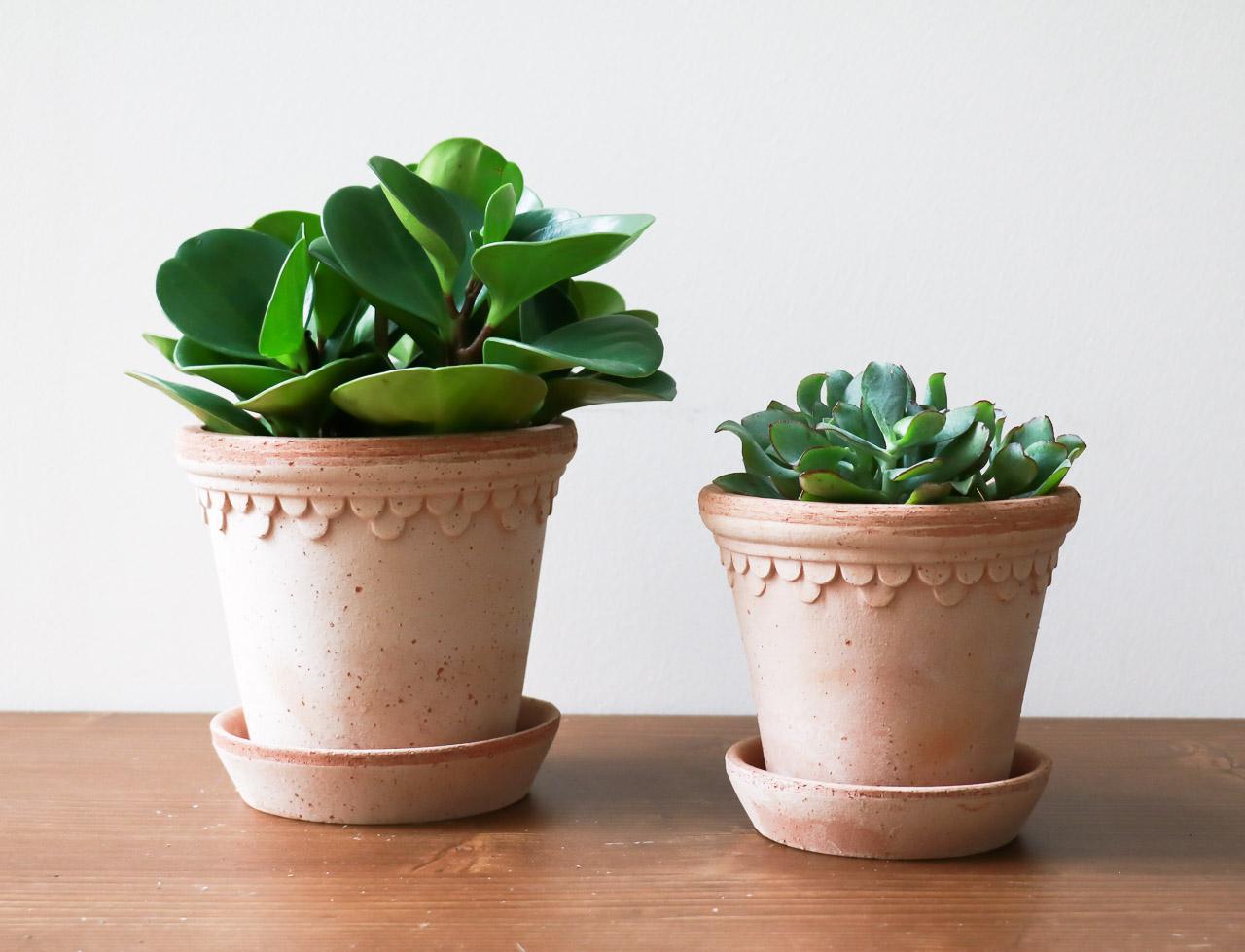 cache-pot antiqua rosa Bergs potter - Maison Mathuvu