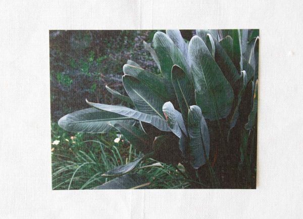 Carte photo - Botanique Maison mathuvu